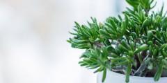 вечнозеленый контент evergreen content